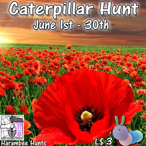 Harambee Caterpillar Hunt - June 2020