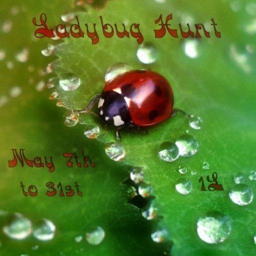 Ladybug Hunt – May 2019